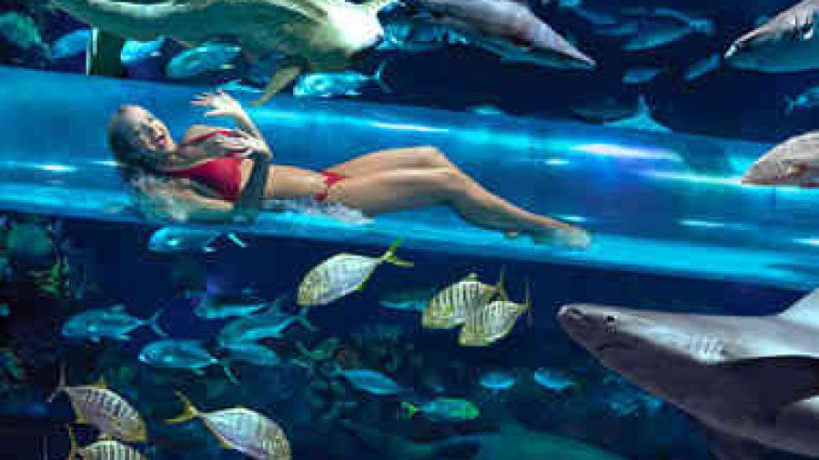 """Golden Nuggets Resort Las Vegas ! uma das 10 piscinas mais """"cool""""do mundo !"""