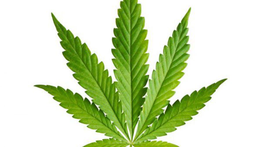 Sin City se completou, marijuana como recreação !