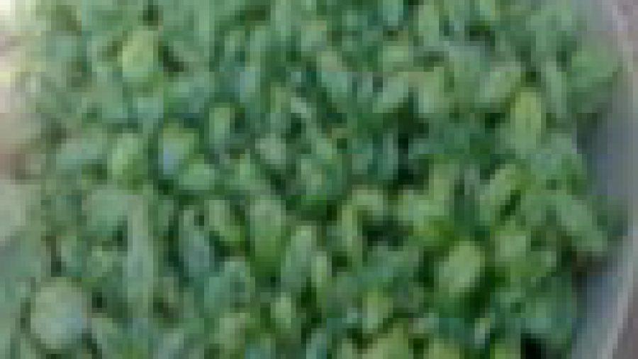 Ervas – Herbs