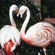 wildlife-habitat-flamingo